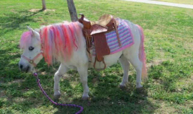 upcoming events at charming pony ranch